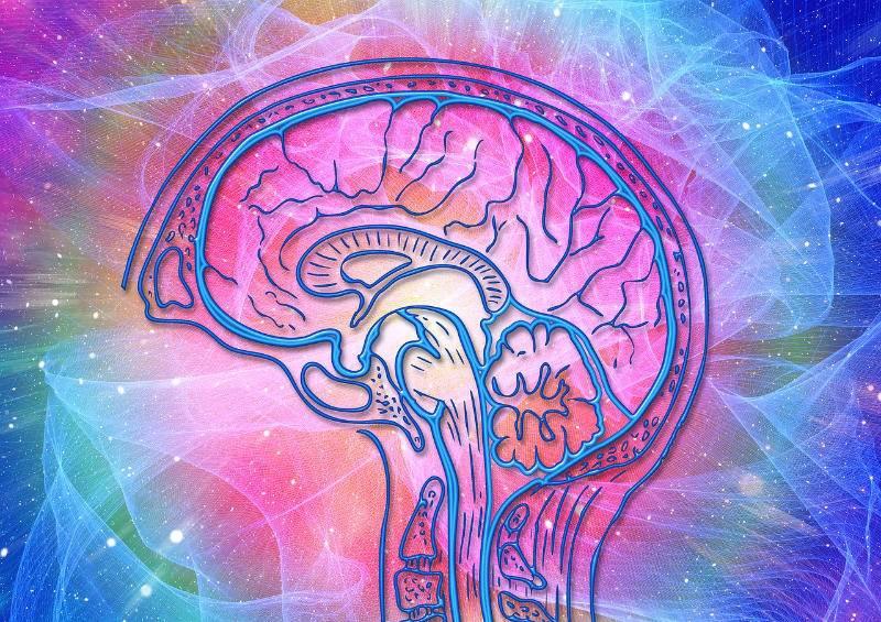 kineziológia agy