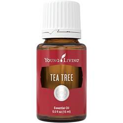 Teafa (Tea Tree - Melaleuca Cajpupt)